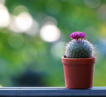 Mini Cactus by vichy