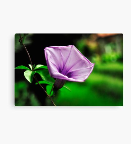 Purple Flower on Green Background Gallery Wrapped Canvas Canvas Print