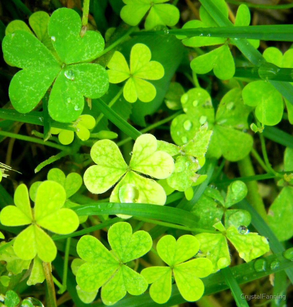 Clover Patch by CrystalFanning