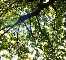 Branches and Leaves 3 by CrystalFanning