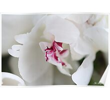 PURE PEONY Poster