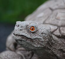 A stone turtle with a orange eye. by Zak-Karle