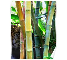 Large Colorful Bamboo  Poster