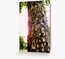 Tree in Kensington Gardens Greeting Card