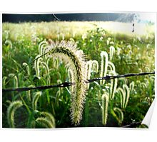 Dew Covered Field Poster