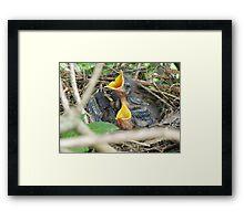 Baby Mockingbirds Framed Print