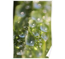LIghted drops of water on the grass Poster