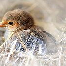 Brown baby chick by Nicole W.