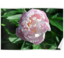 flowers with droplets Poster