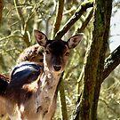 Roe deer by Peter Wiggerman