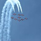 Canadian Snowbirds by deb cole