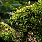 Flowering moss at Rydal by brianhardy247