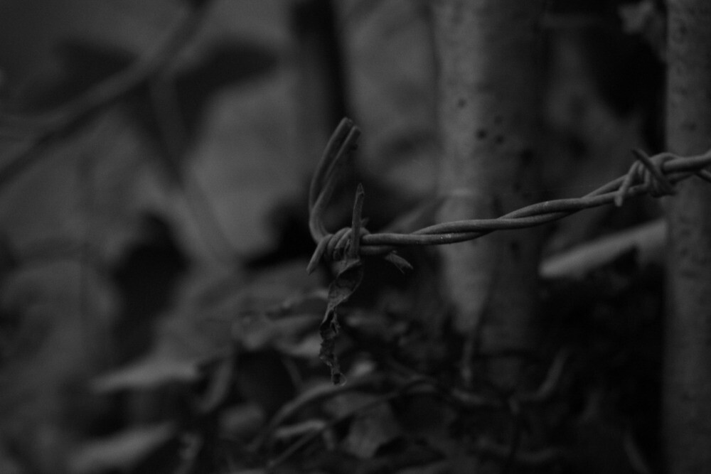 Barbed wire by Aaron  Wahab