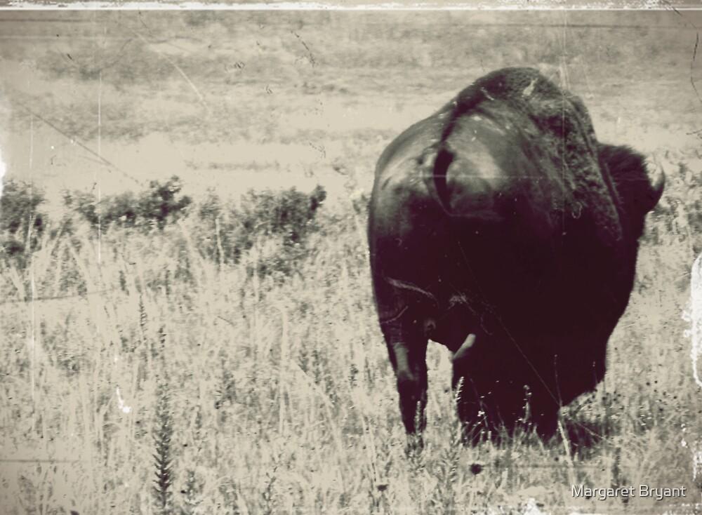 Bison Butt by Margaret Bryant