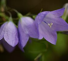 Hope Inspired ~ Harebell by JETAdamson
