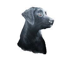 Loyal Labrador Photographic Print