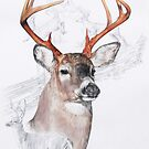 White Tailed Deer by BarbBarcikKeith