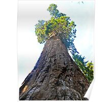 Great Sequoia Poster