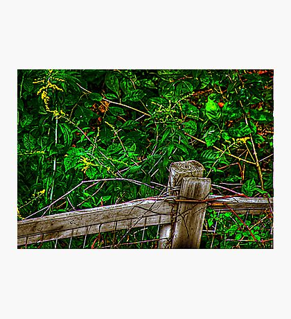 Forest Foliage Photographic Print