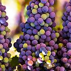 Hanging Bunches of Grapes  by msqrd2