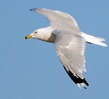 Seagull # 1 by Unelanvhi