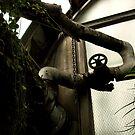Botanical Pipe by SanjayKalyan