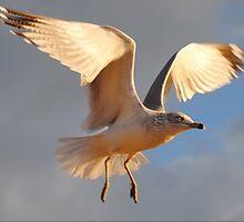 Seagull # 2  by Unelanvhi