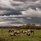 Wild Horses by TLund