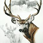 Mule Deer by BarbBarcikKeith