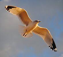 Seagull # 3 by Unelanvhi