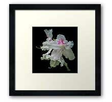 Ghost Flowers Framed Print