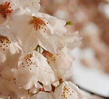 Welcoming Spring by DanielaCC