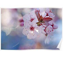 Bokeh Blossom Poster