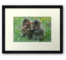 Baby Snow Monkeys Framed Print