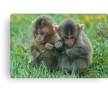 Baby Snow Monkeys Canvas Print