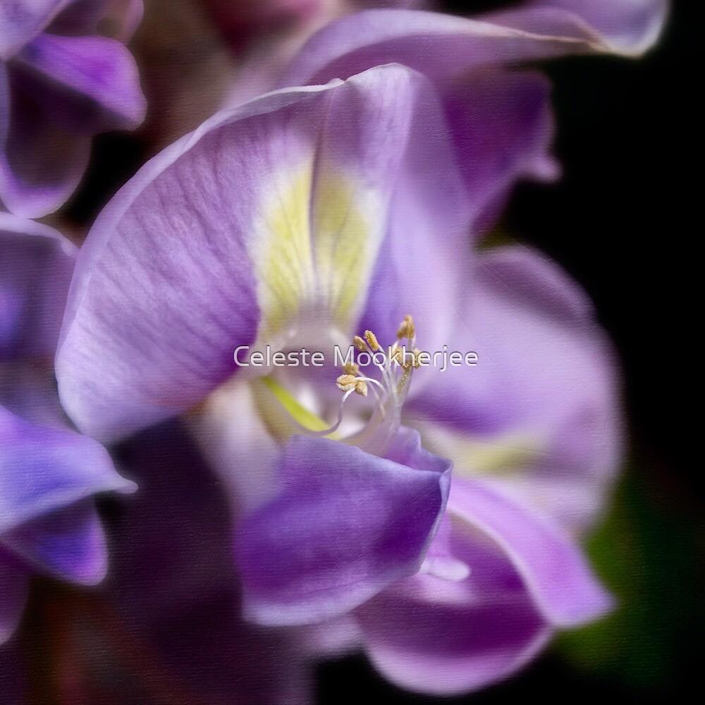 Intimate wisteria by Celeste Mookherjee
