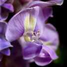 Intimate wisteria by Celeste Mookherjee