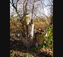 Old Tree Stumps Unisex T-Shirt
