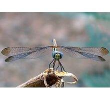 Dragonfly Headshot Photographic Print
