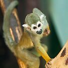 Squirrel Monkey by RedMann