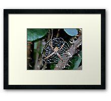 Web Day.... Framed Print