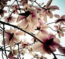 Blossom Case by samsphotos12