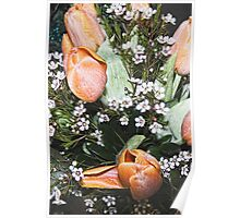 Peach Tulips Poster