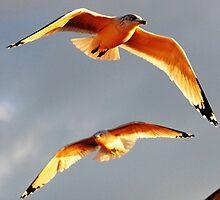 Seagull # 4 by Unelanvhi