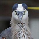 Shore Birds by Dennis Cheeseman