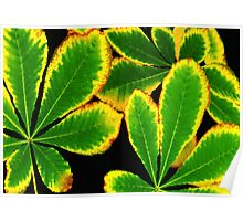 Neon Green Leaves Poster