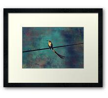 Sugarbird Framed Print