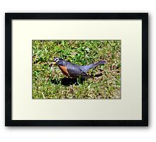 Want Some? Framed Print