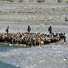 Goats at River en route to Ghasa by SerenaB