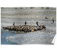 Goats at River en route to Ghasa Poster